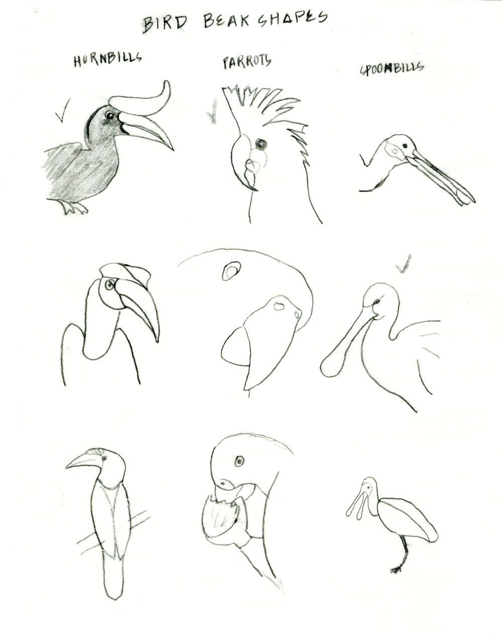 sketch_Scans copy.jpg