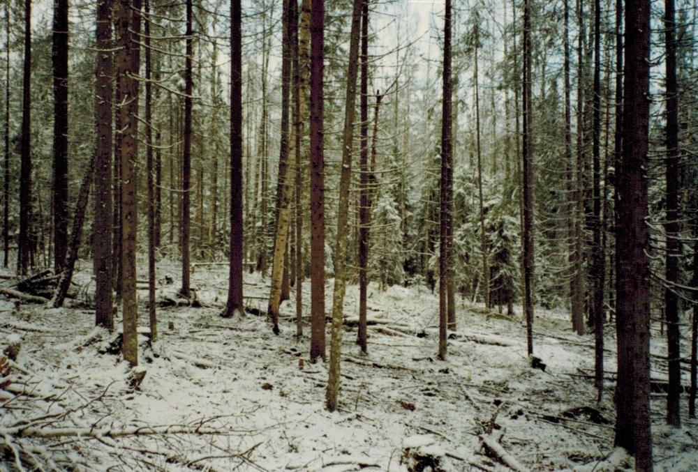 Russia_luminen-metsäkuvio.jpeg