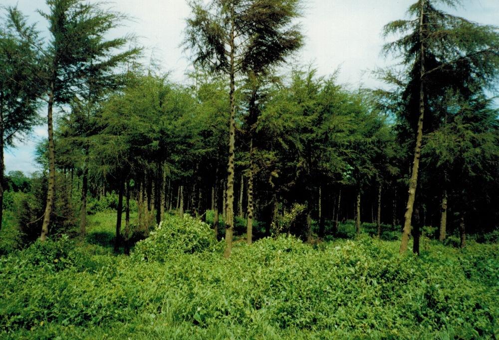 Kenya_W_forest.jpeg