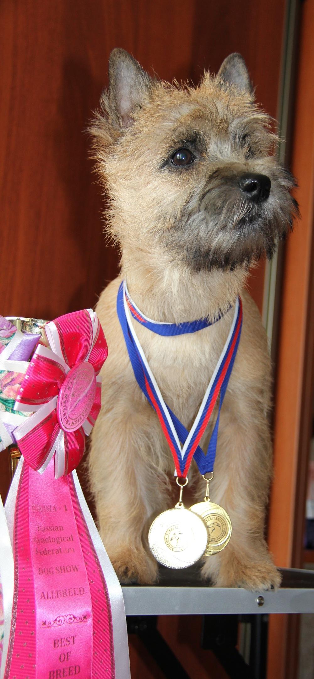 Alex won Best Baby Puppy in Moscow