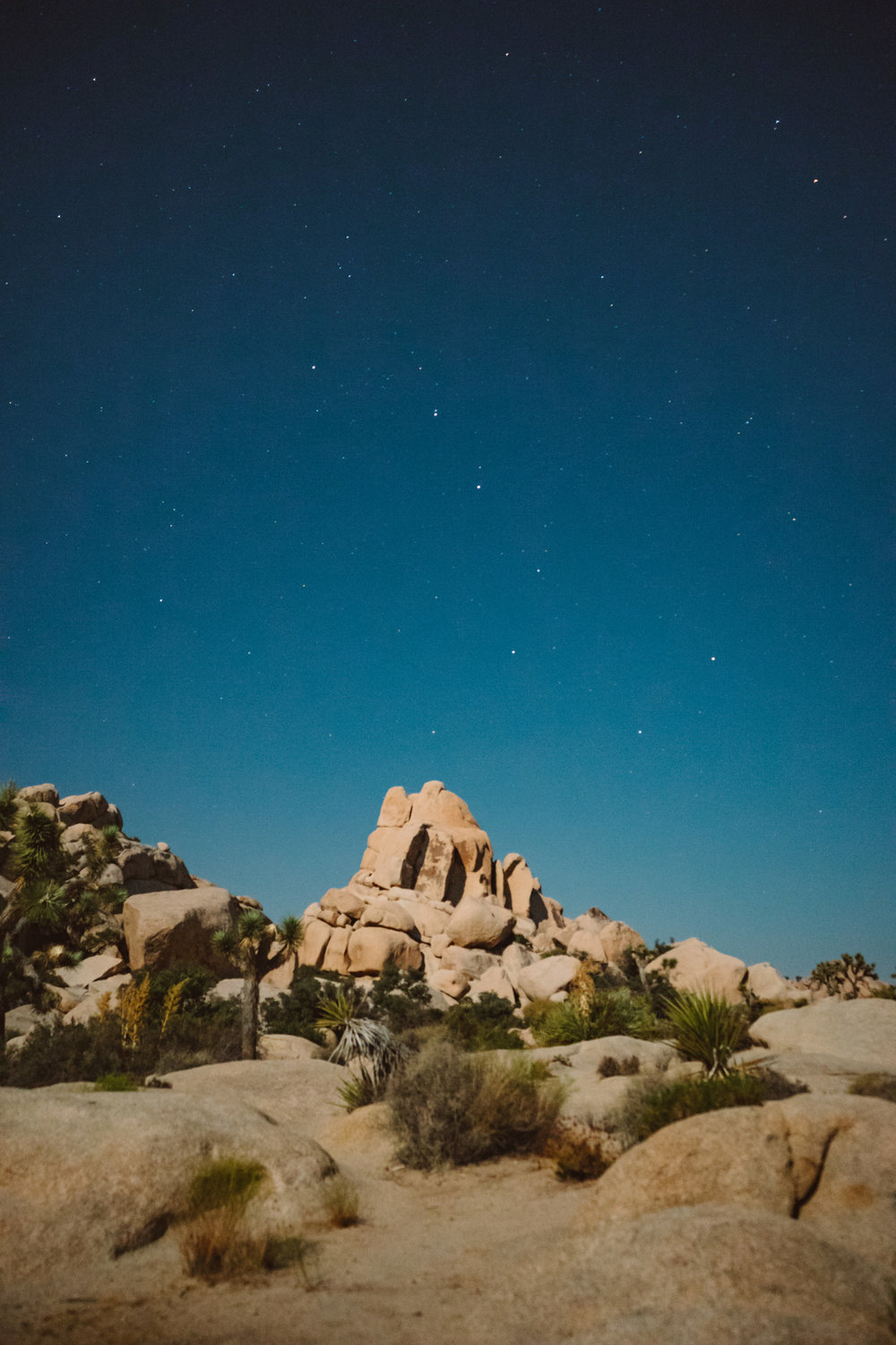 scott-snyder-photo-joshua-tree-05.jpg
