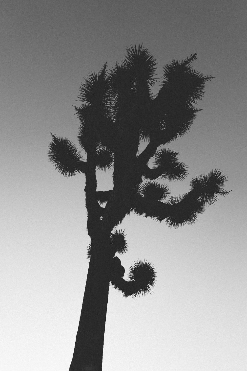scott-snyder-photo-joshua-tree-08.jpg