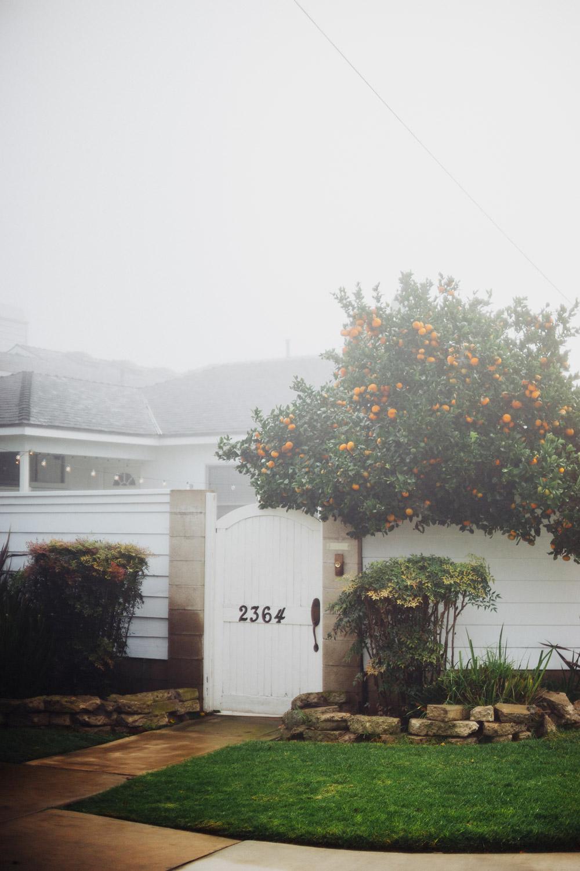 08-scott-snyder-photo-cm-neighborhood-journal.jpg