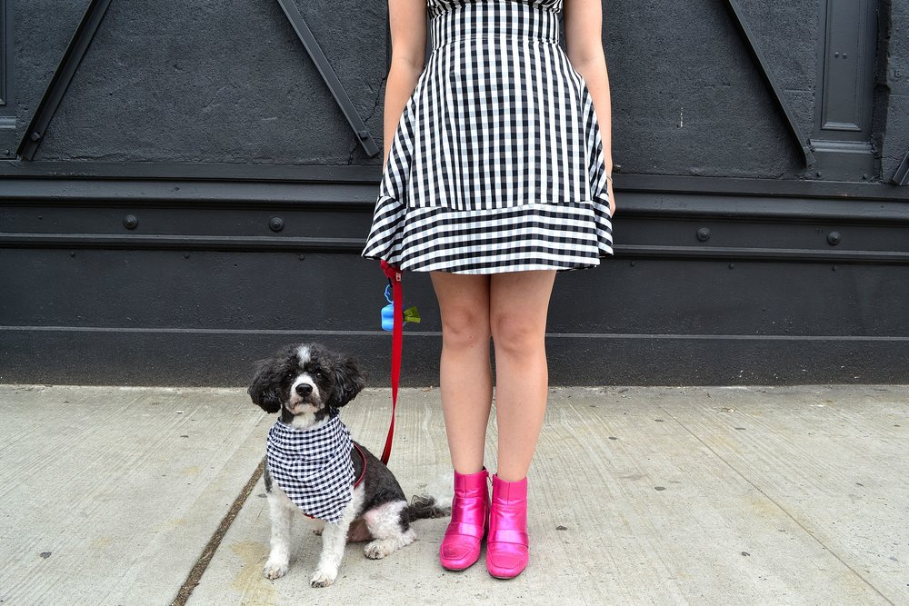 kate spade dress asos pink booties dog 2.JPG