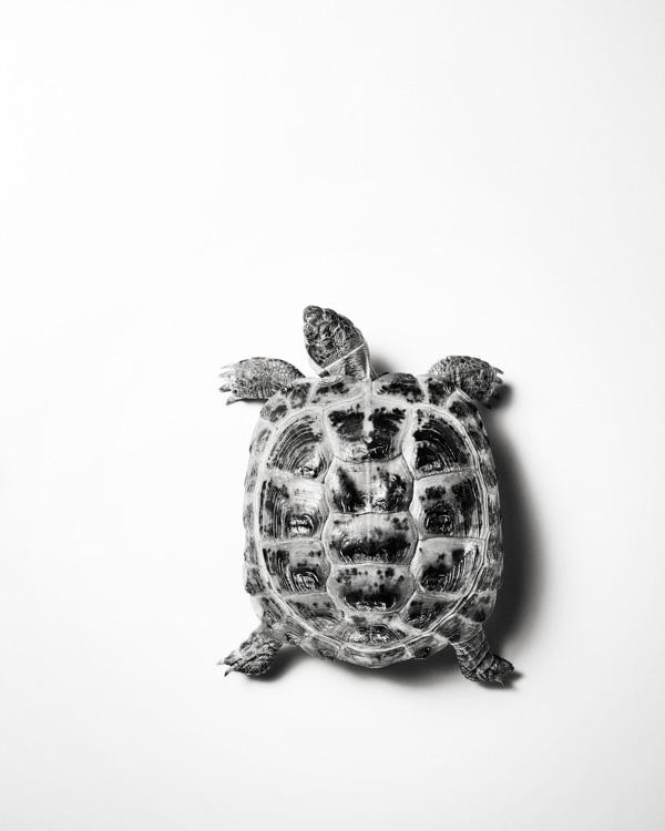 jarren vink turtle