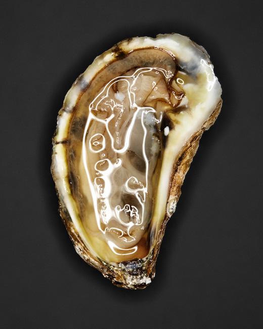 jarren vink osyter oysters  saltwater  clams  bivalve  molluscs
