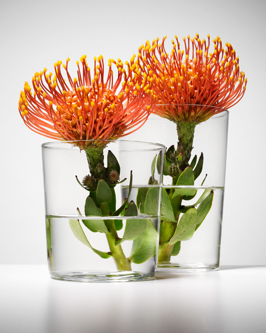 jarren vink flower flowers water glass glasses still life