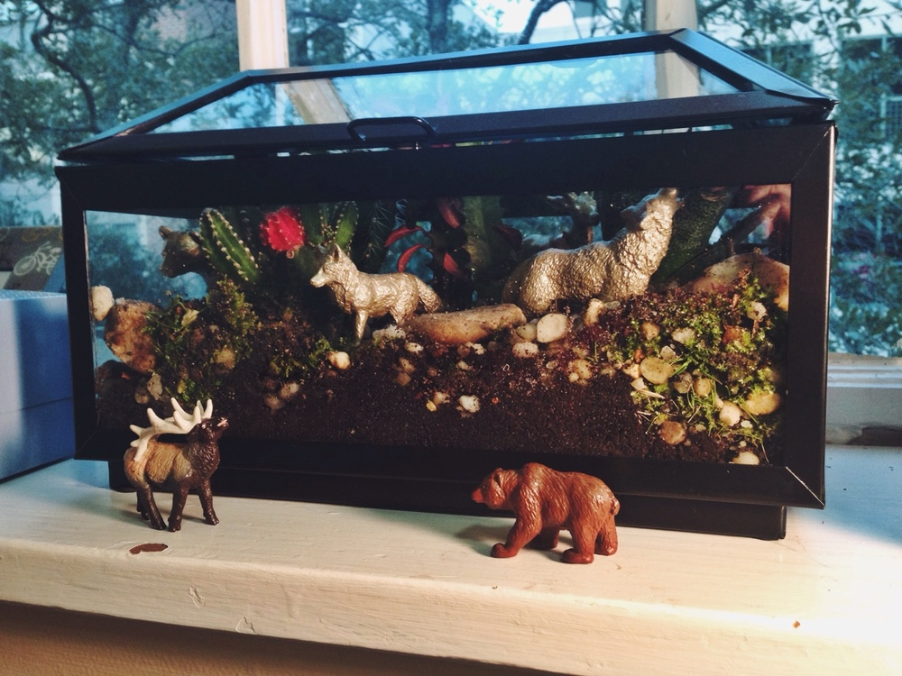 My mom helped me make this terrarium for our apartment using the container that held our wedding favors and the plastic animals from our groom's cake. I'm excited to have a few more plants in the room and even more excited that we were able to repurpose some sentimental objects from the wedding reception. Now if I can just keep them alive for a while! I would be grateful for any advice on how to keep succulents alive.