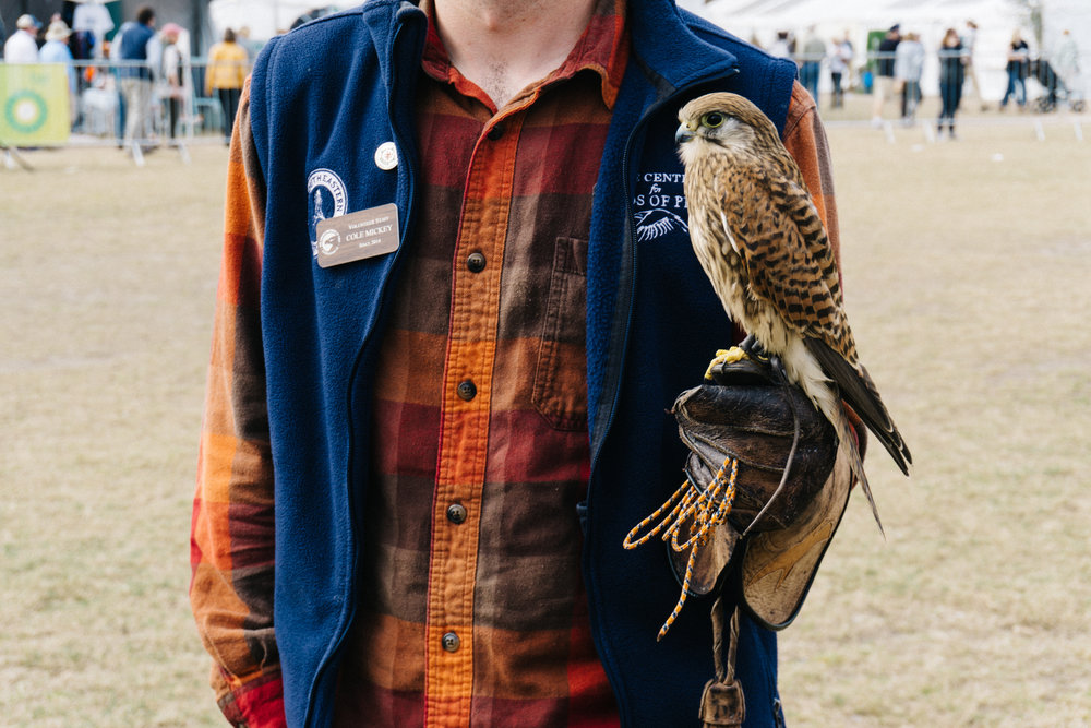 Falcon at SEWE from Center for Birds of Prey in Charleston