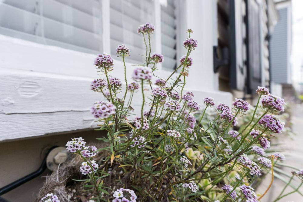 Charleston Windowbox Flowers