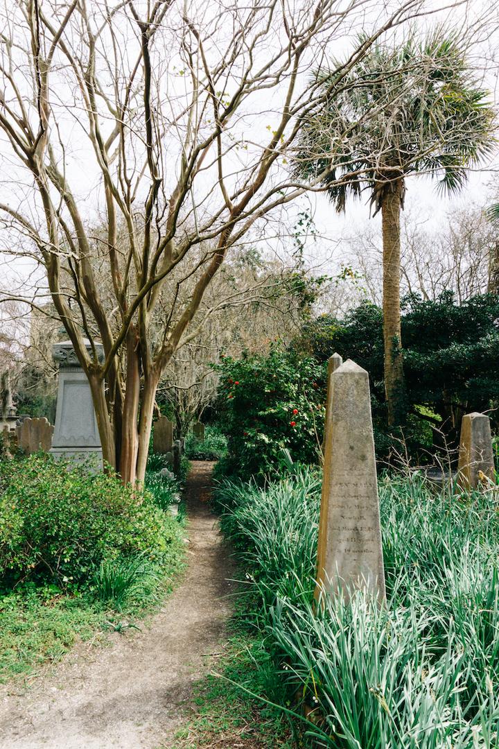 Palm Tree in Charleston Cemetery