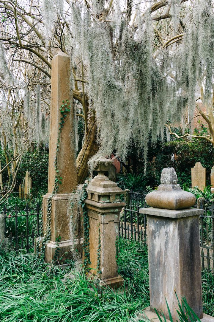 Moss in Unitarian Church of Charleston graveyard