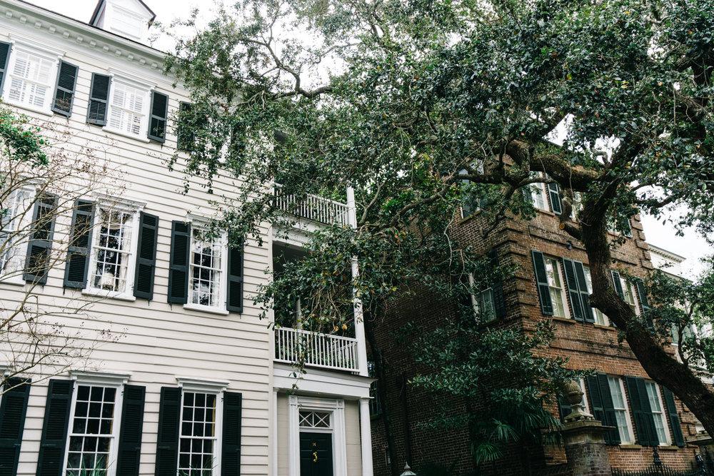 Old Oak Trees in Charleston SC