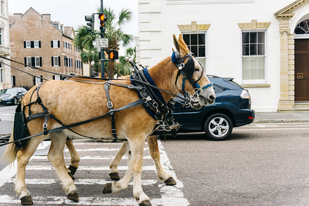 Horse Carriage in Charleston