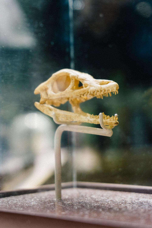 Arcteryx skull