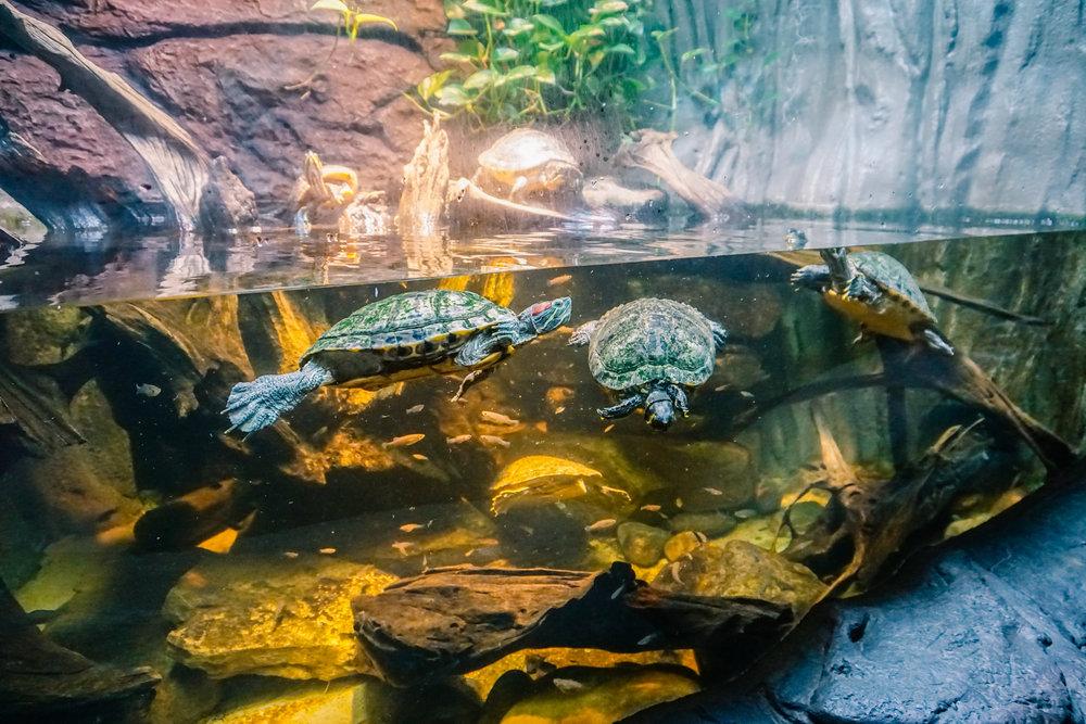 Georgia-Aquarium-13.jpg