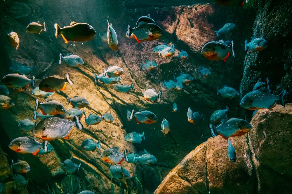 Georgia-Aquarium-15.jpg