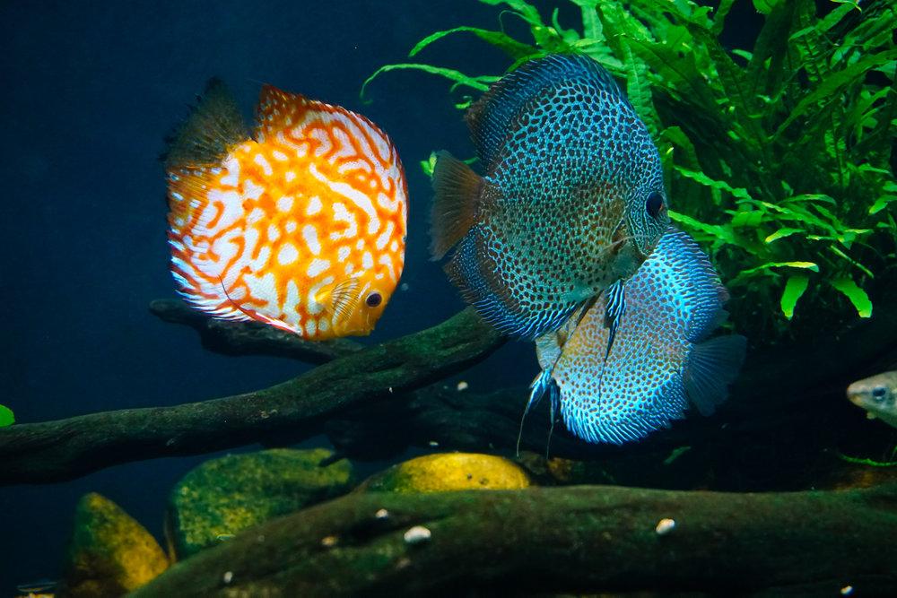 Georgia-Aquarium-20.jpg