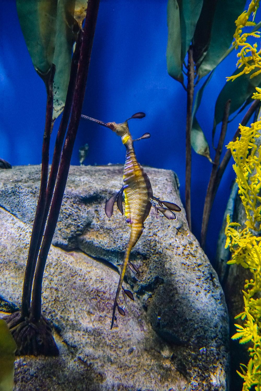 Georgia-Aquarium-28.jpg