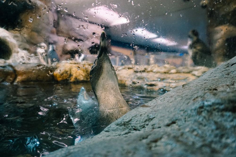 Georgia-Aquarium-26.jpg
