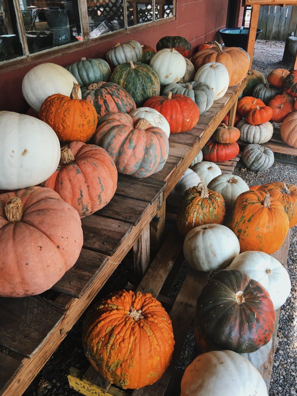 Pumpkins at Bedford Greenhouses in Augusta, Georgia