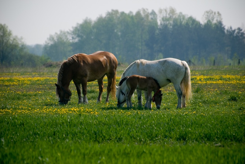 grazing square.jpg