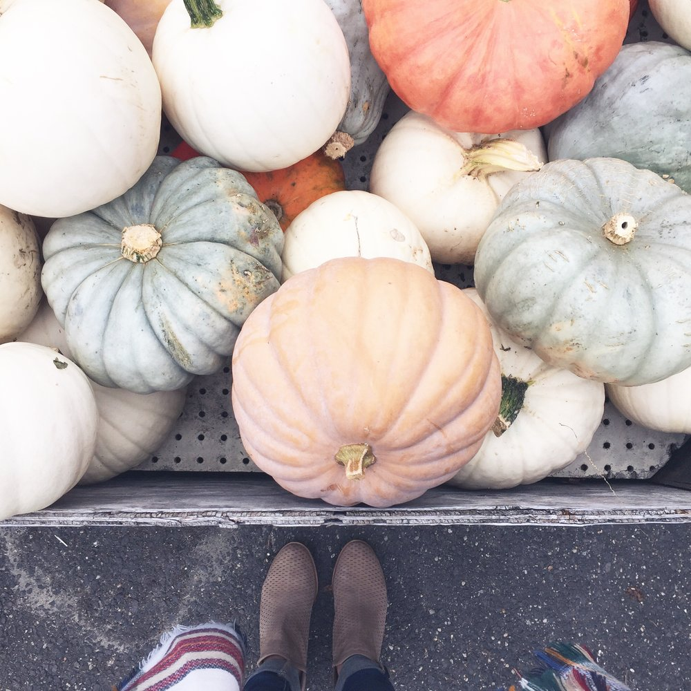 pumpkins // pinebarrenbeauty.com