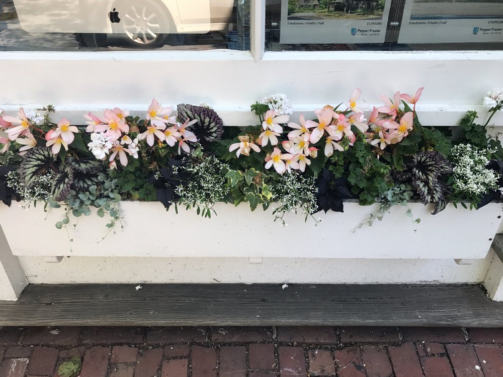 window box / flowers / nantucket travel guide