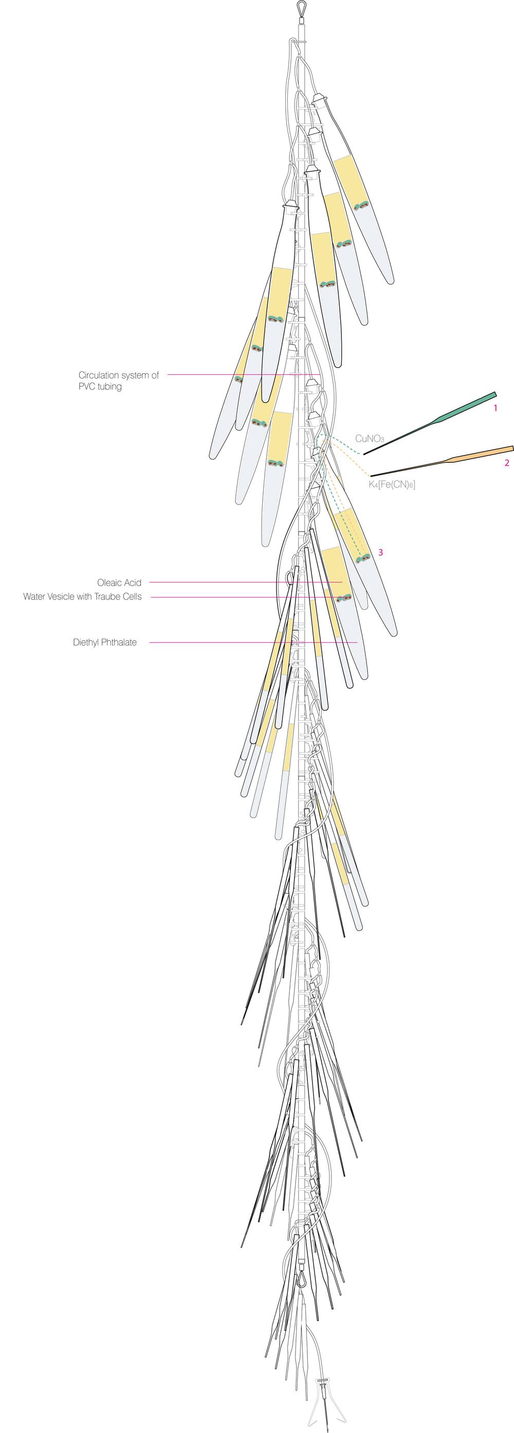 12F18-1036 Carrot Chain Diagram.jpg