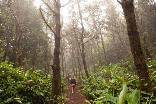 Faial_forest15.jpg