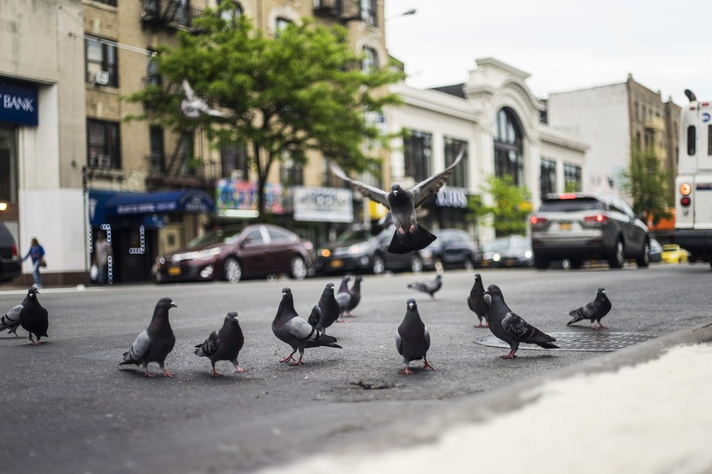 We really just liked this picture, but upon deeper thought we realized that pigeons are historically carriers of important messages. That symbolism couldn't have been more fitting for our next visit to Hunts Point.