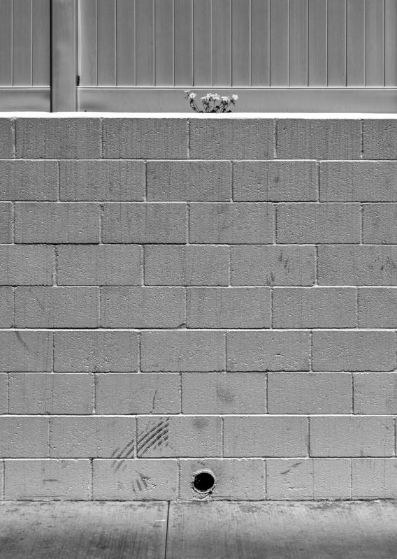 Wall Flowers b-w.jpg