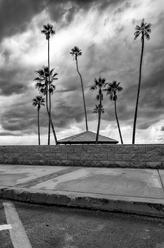 8 Palm Trees B-W Combined.jpg