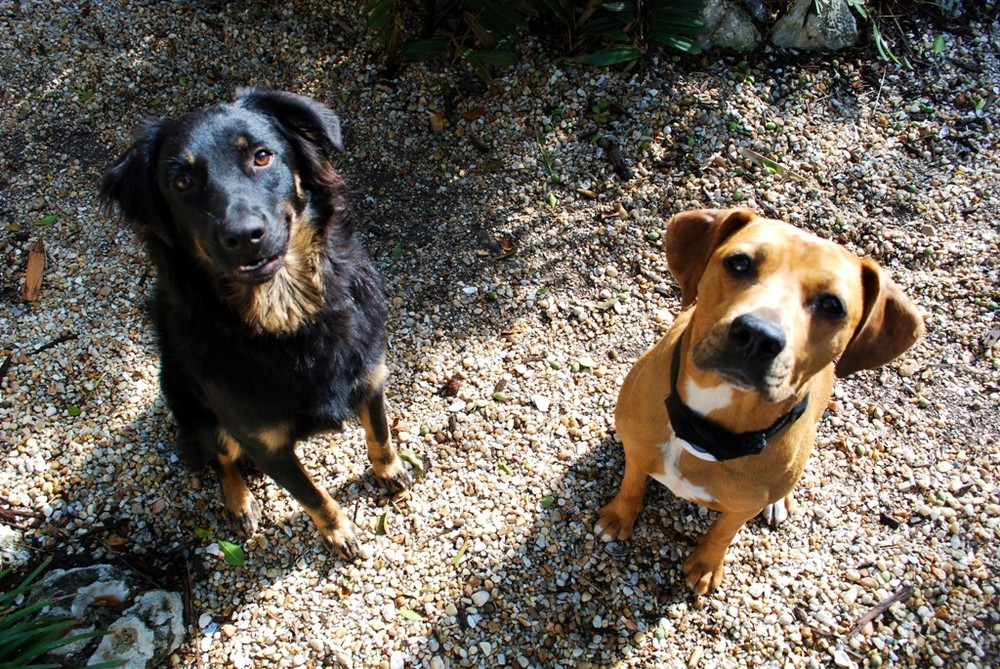 Luca and Kalli-1.JPG