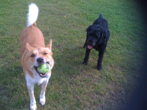 Happiness is playing fetch with my brother and my favorite squeaky ball!