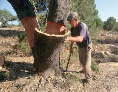 Cork Tree Harvest.jpg