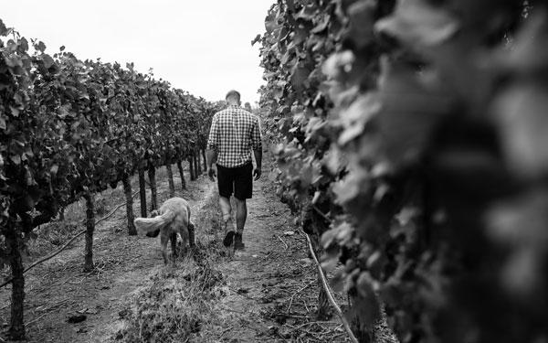 Matt Iaconis Winemaker 3.jpg