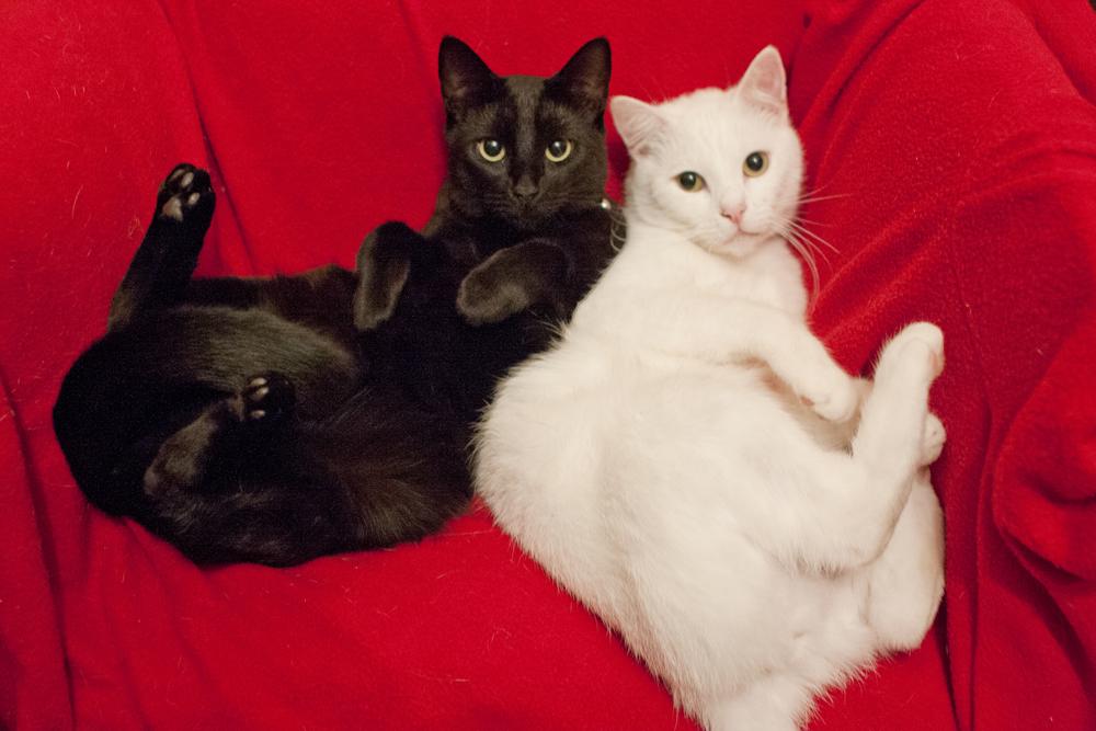 janetscats.jpg