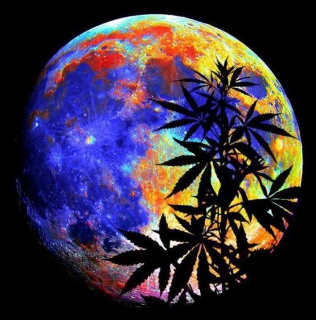 moon weed.jpg