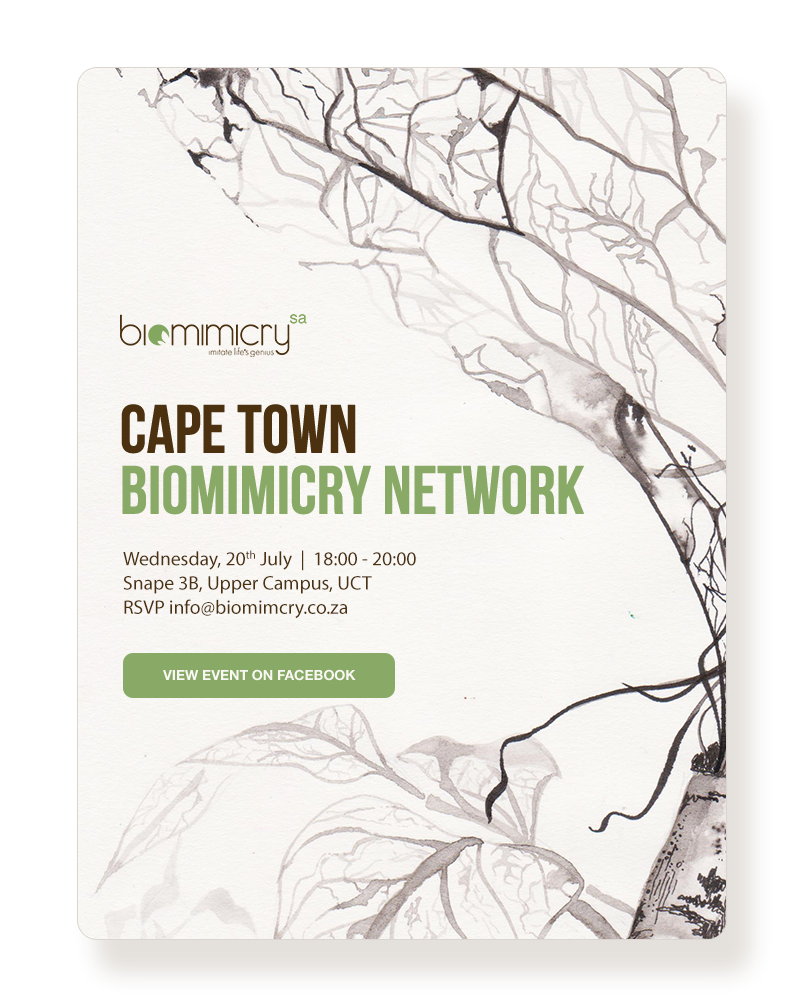 - Example of Cape Town Biomimicry Network Events