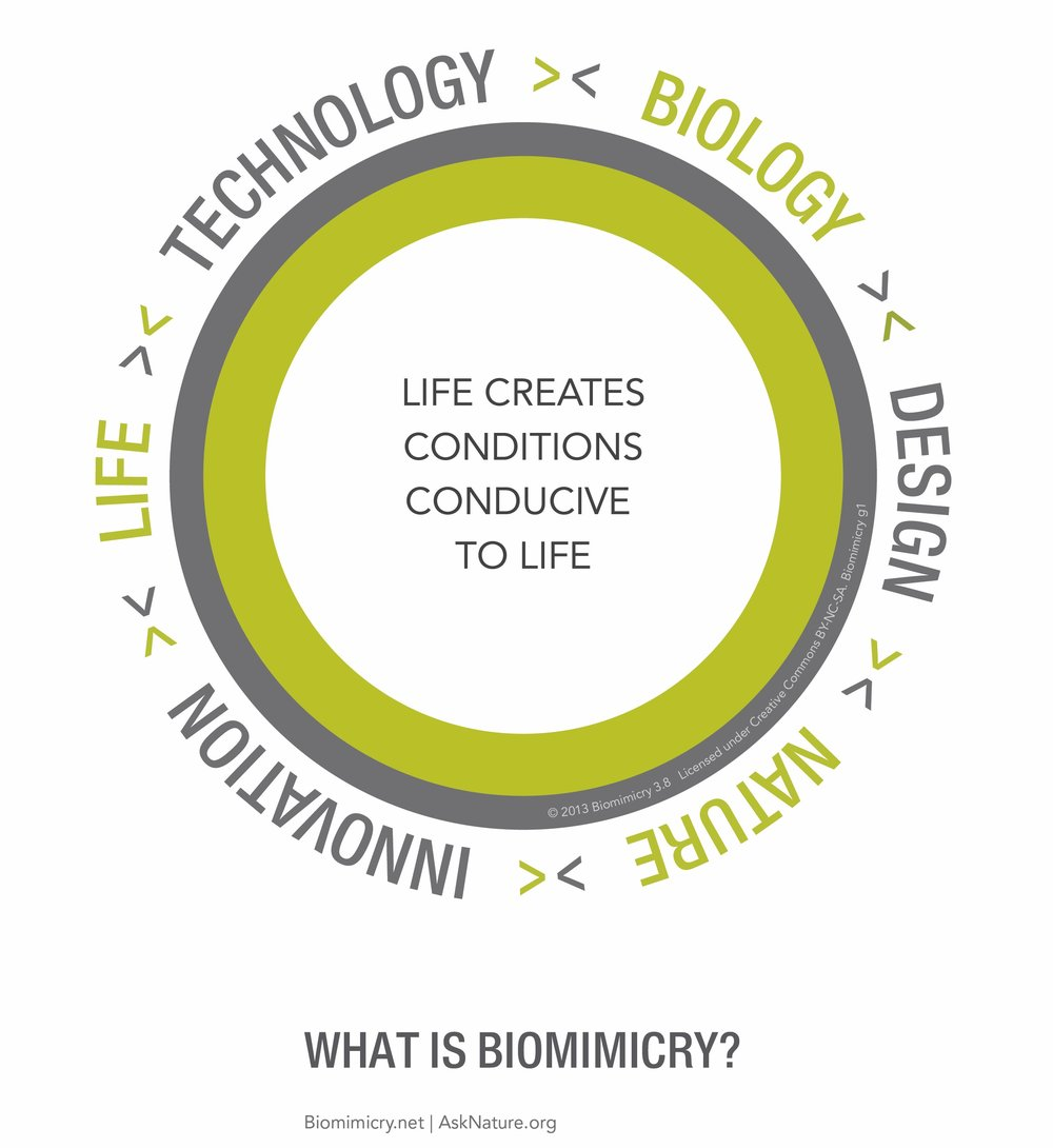 What is Biomimicry?.jpg