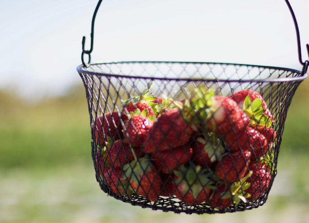 Basket-Strawberry2.jpg