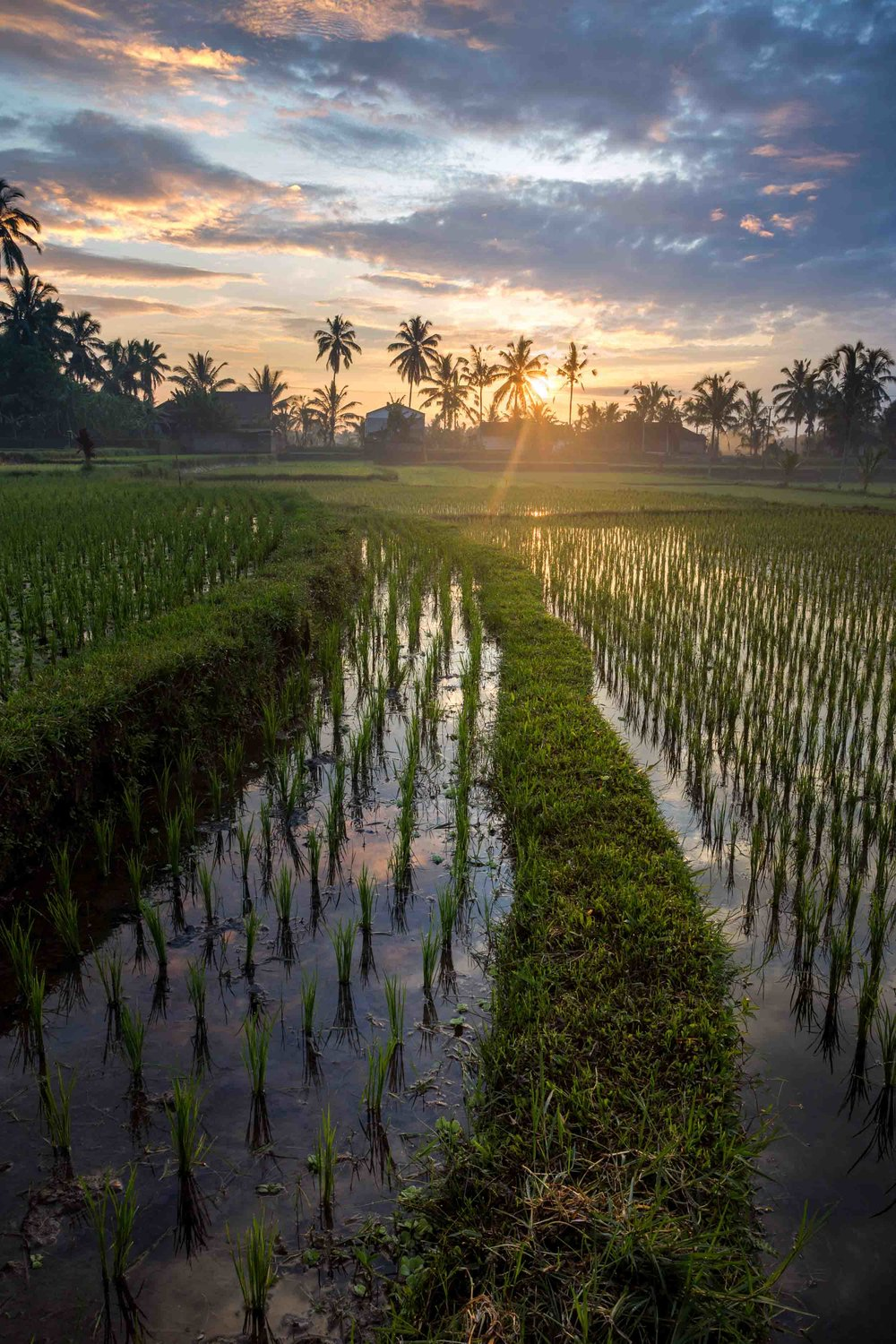 bali indonesia sunrise over rice paddies fields reflection in water colourful outdoors landscape.jpg