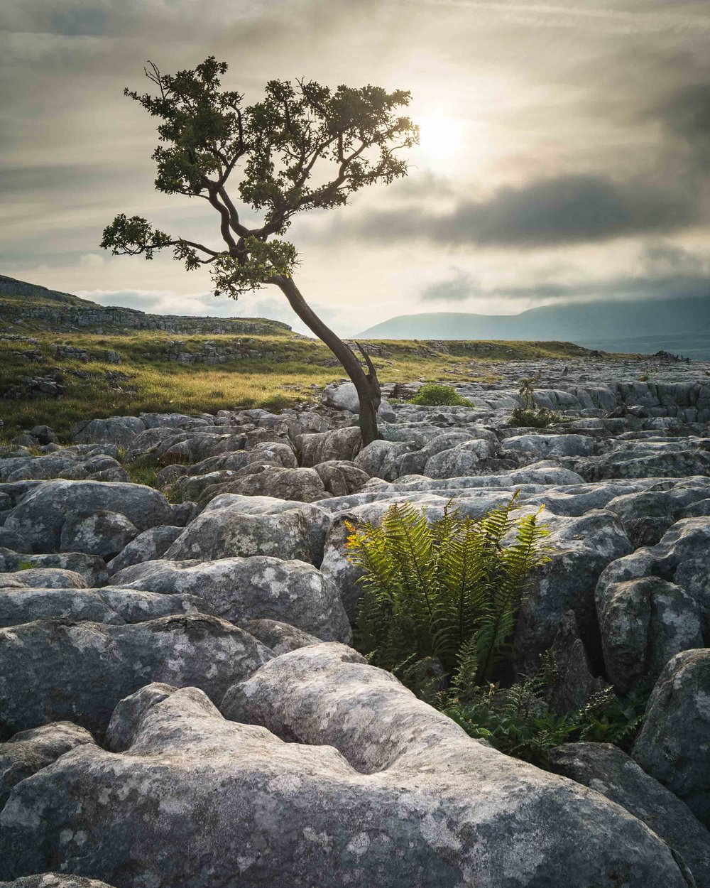 twistleton scar yorkshire dales national park north yorkshire ingleton limestone pavement twisted lone tree at sunrise dark moody clouds landscape.jpg