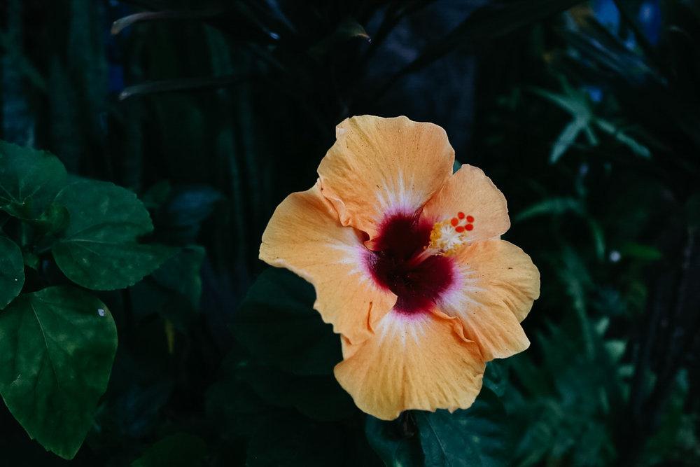 Hawaii209.jpg