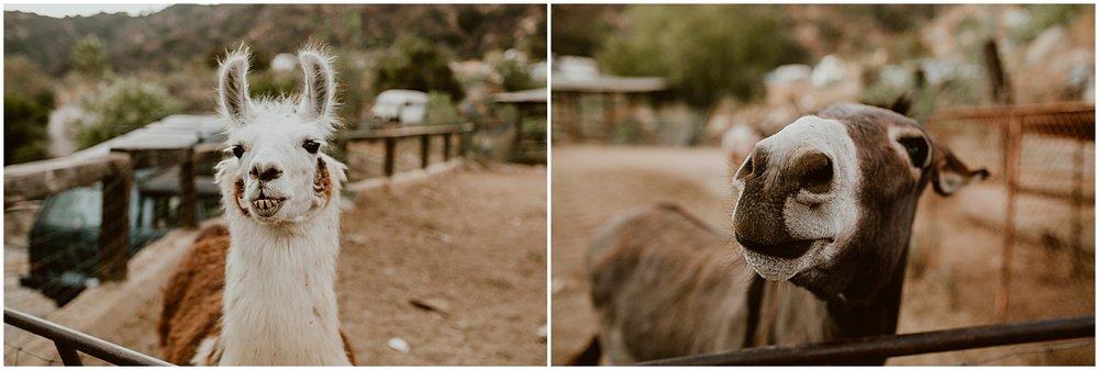 Zorthian-Ranch-Wedding-M+B-Diana-Lake-Photography-891.jpg