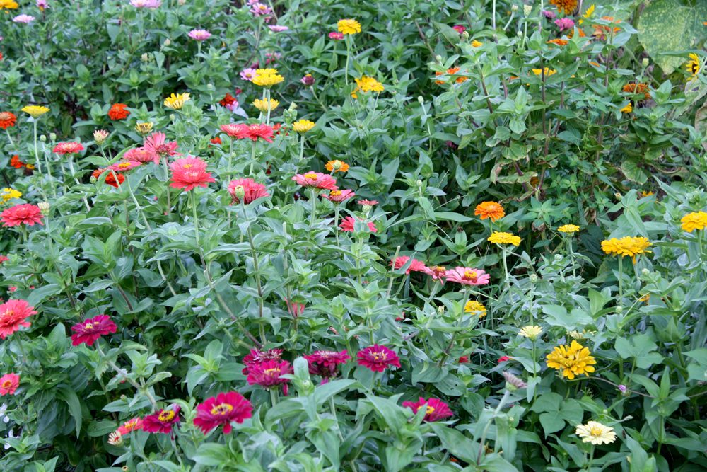 Longview-Farm-dc-FLOWERS.png