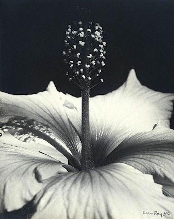 ManRay_flower.jpg