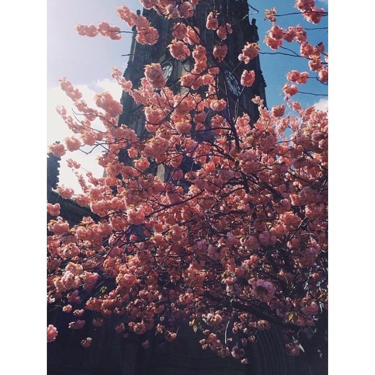 spring2.png