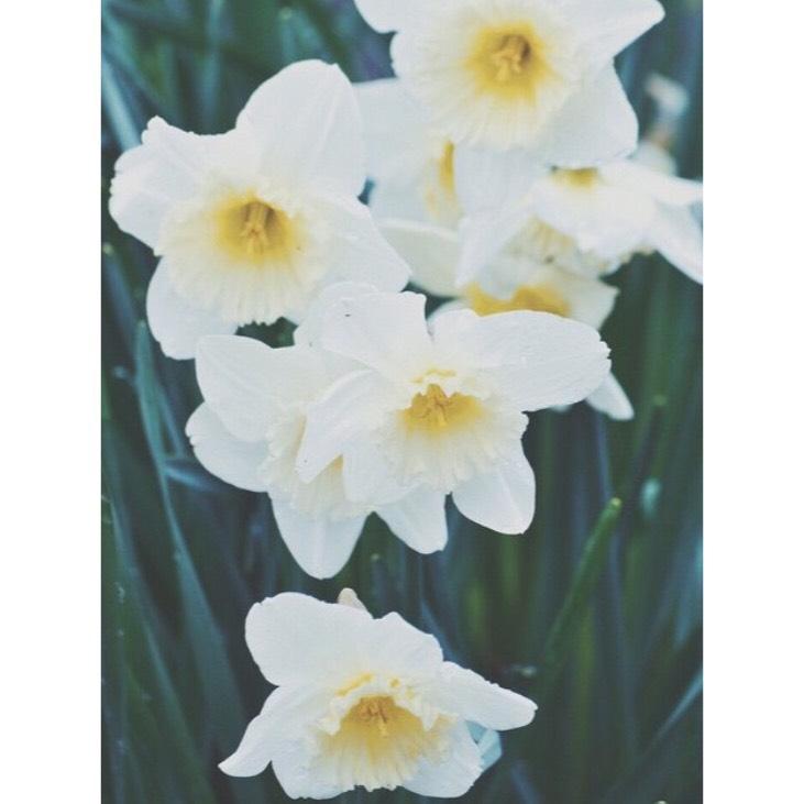 spring3.png